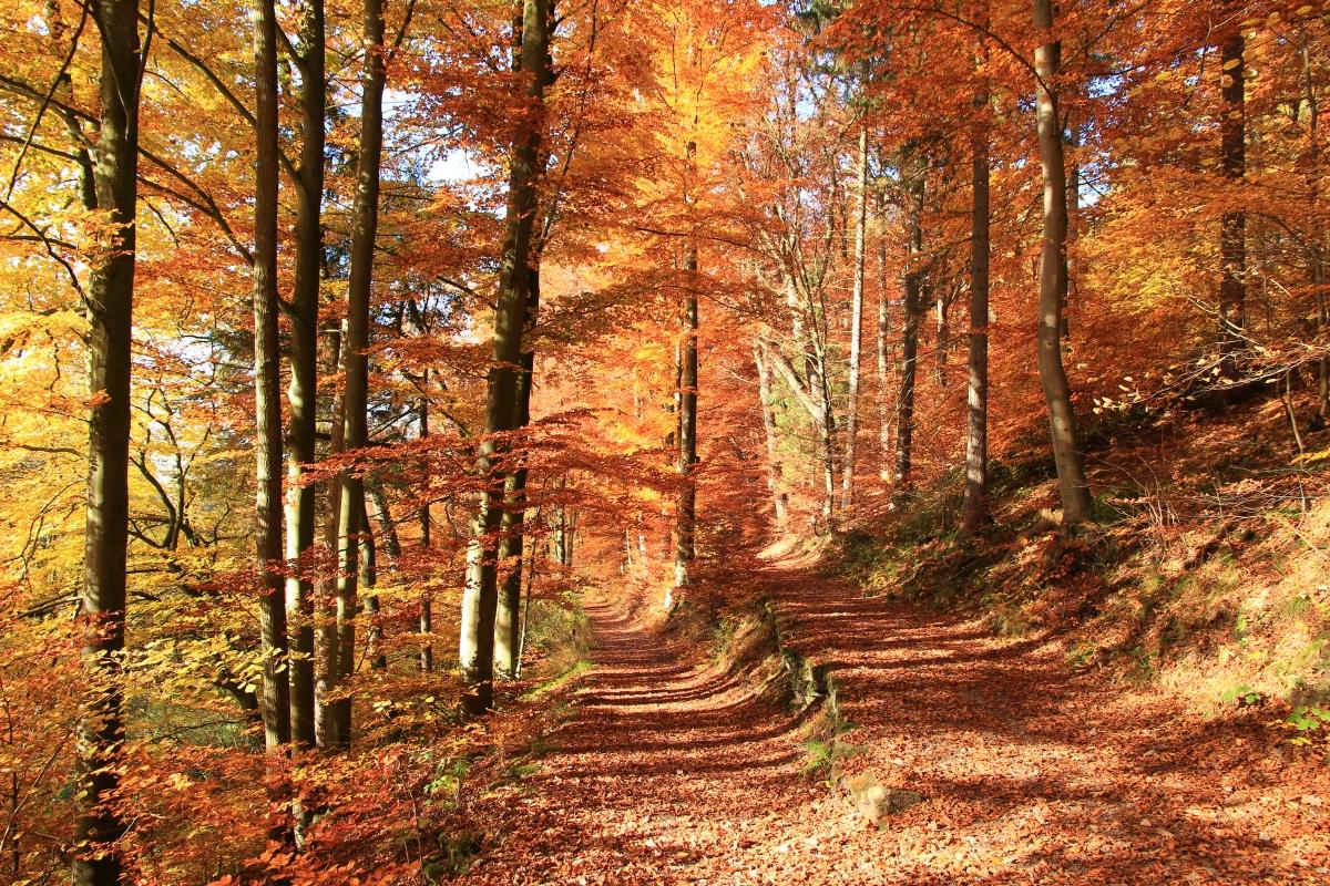 Der Oktober, der ein Novemberwar