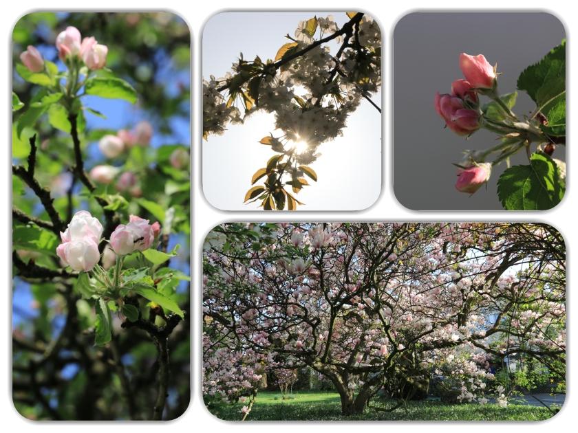 Blüten_2